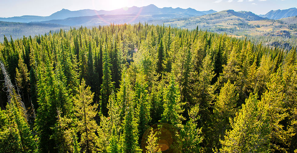 Aerial view of an evergreen forest with mountains in the background